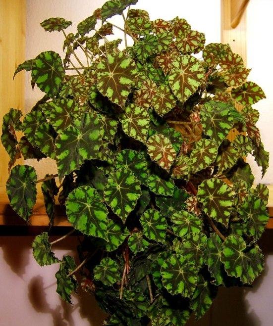 Комнатные растения которые приносят счастье в дом