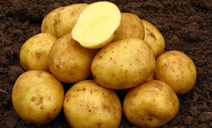Картофель Нандина